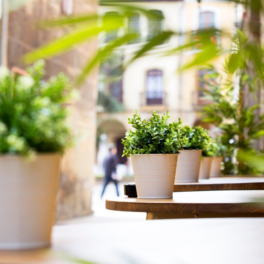 Plantas situadas en la entrada del restaurante Ronda 14 de Avilés